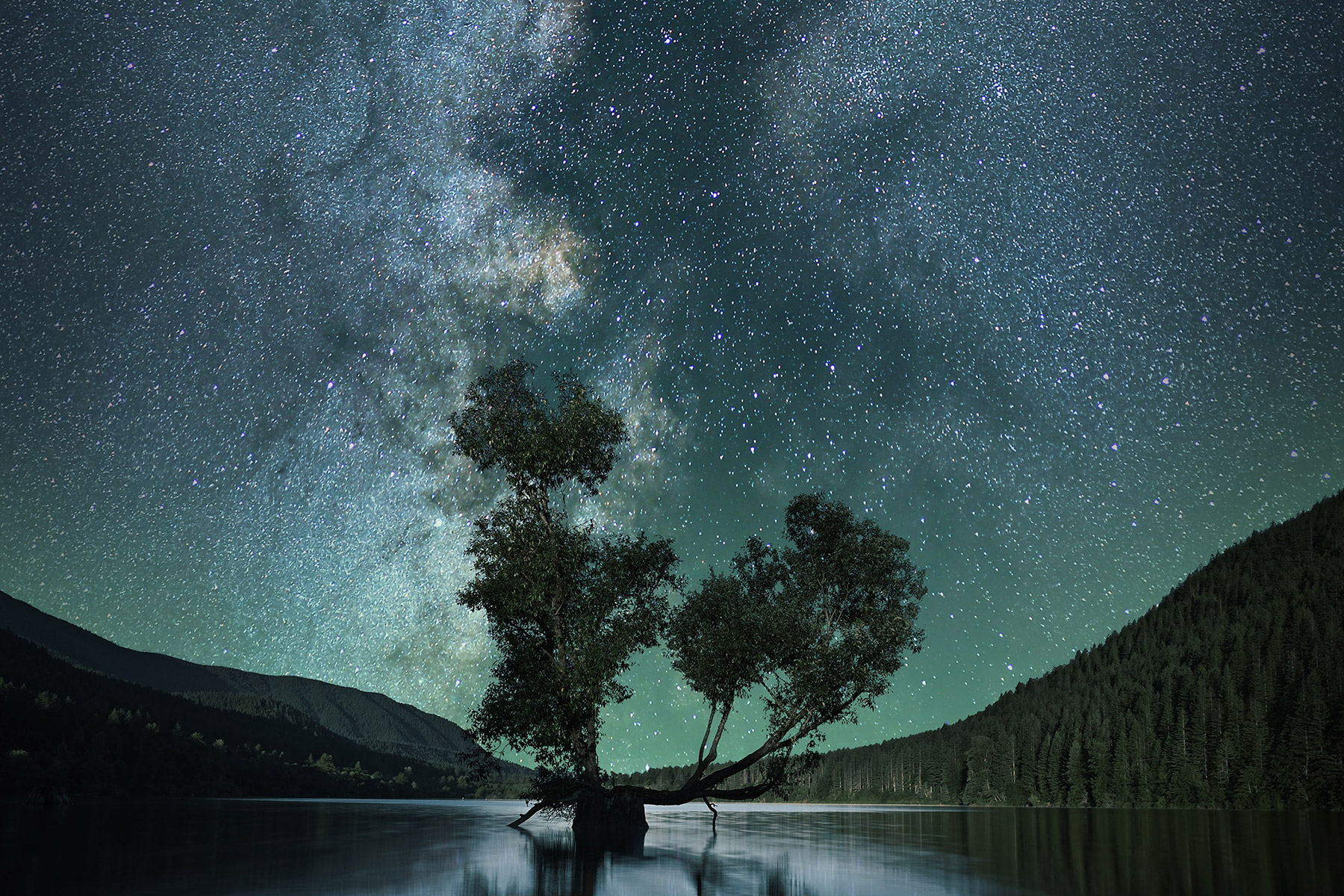 milky-way-tree