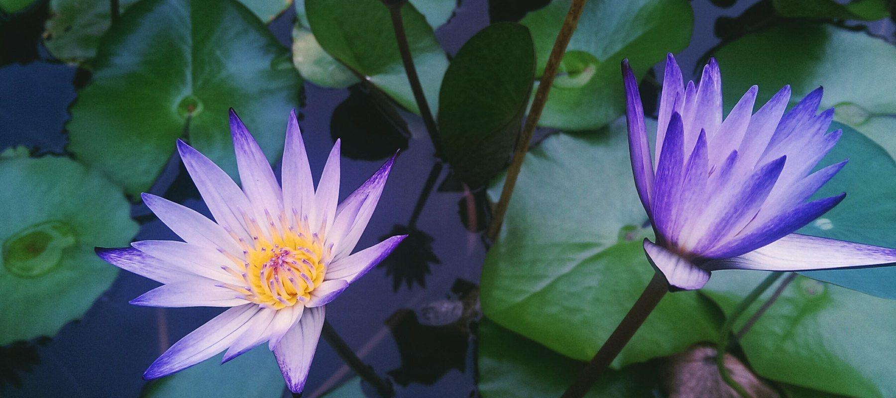 The Birth Of The Water Lily Reservation